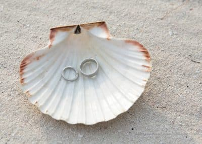 rings in a sea shell